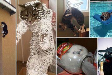 Cats Epic Fails