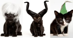 Cats In Hats Shaina Fishman