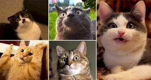 Confused Cats