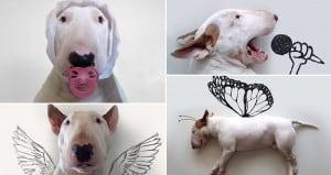 Jimmy Choo Bull Terrier Marriage Rafael Mantesso