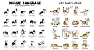Lili Chin Body Language Cats And Dogs Illustrations