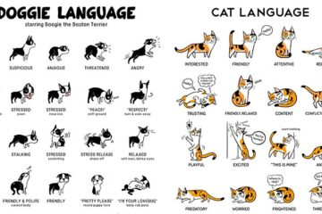 Lili Chin Body Language Cats And Dogs Illustrations
