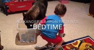 Little Boy Dog Bedtime Routine