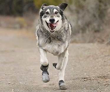 Outdoor Dog Boots running