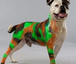 Pet Paint Colored Hair Spray camo