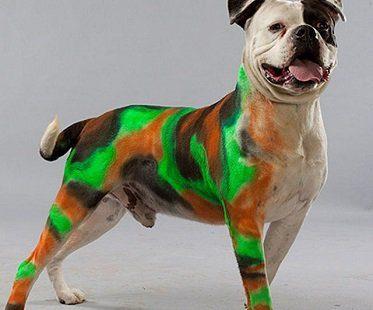 Pet Paint Colored Hair Spray camo