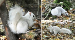 Rare White Squirrel Andrew Fulton Photography