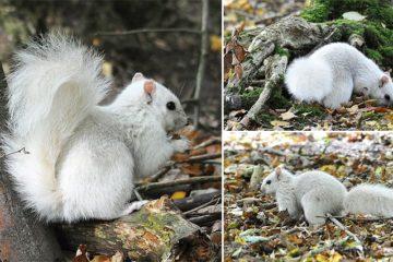 Rare White Squirrel Andrew Fulton Photography