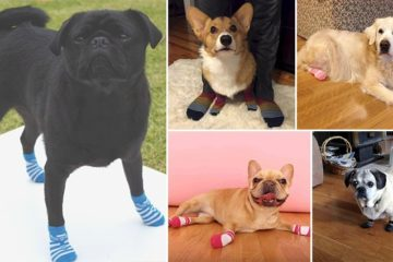 Sock-Wearing Dogs