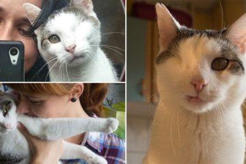 Stray Cat Damaged Eye Pirate New Home