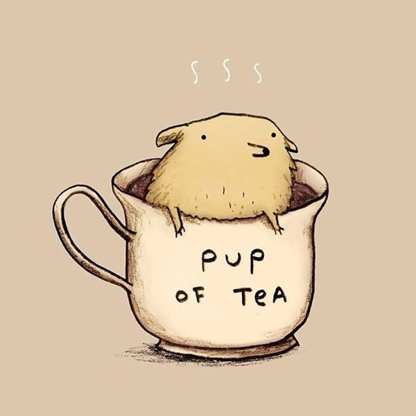 Cute Puns 10 Of The Cutest Animal Illustration With Clever
