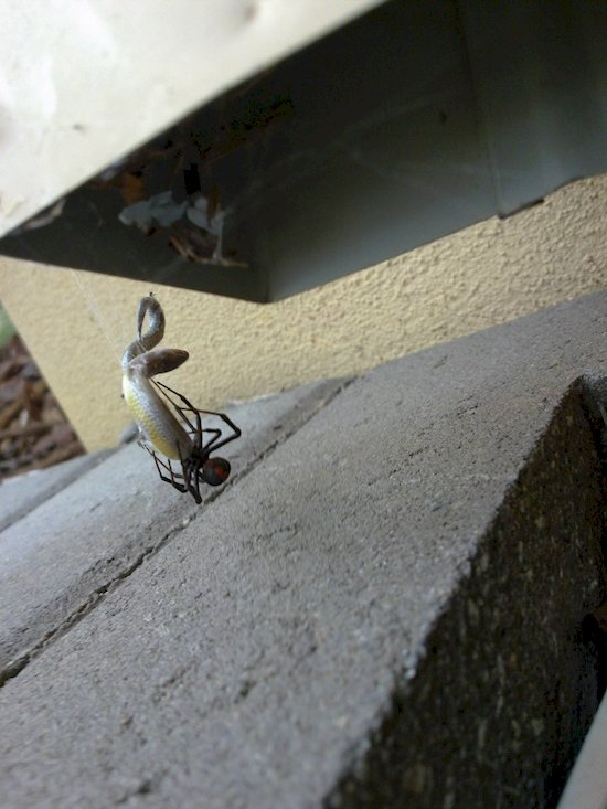 australia-out-to-get-you-fight-snake