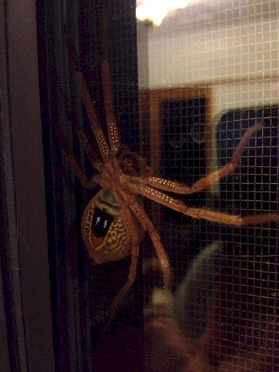australia-out-to-get-you-spider