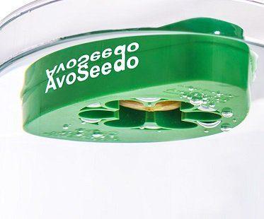 avocado grow bowl seed