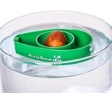 avocado grow bowl top