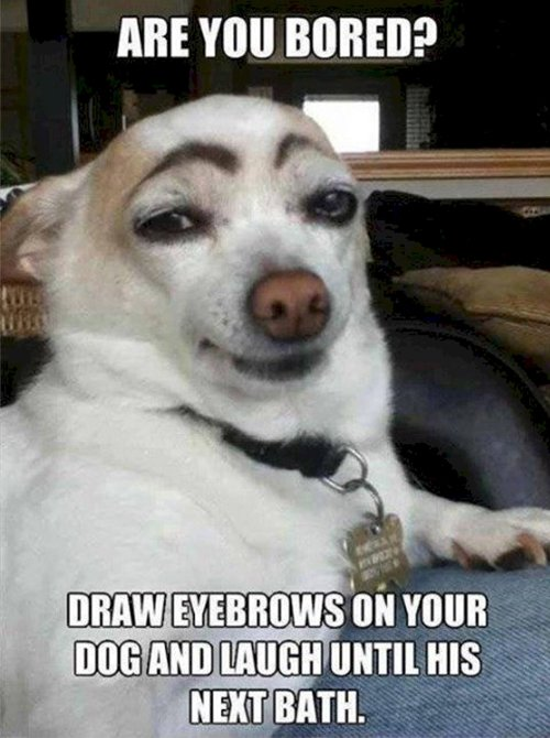 boredom-dog-brows
