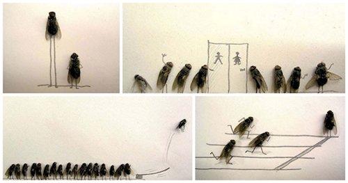 boredom-flies
