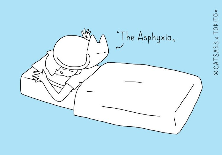 cat-asphyxia