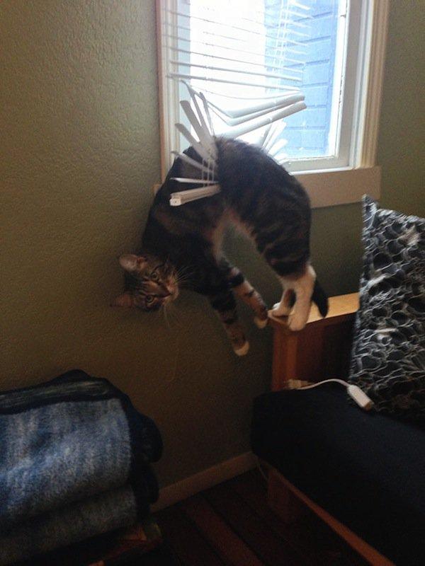 cat-blind