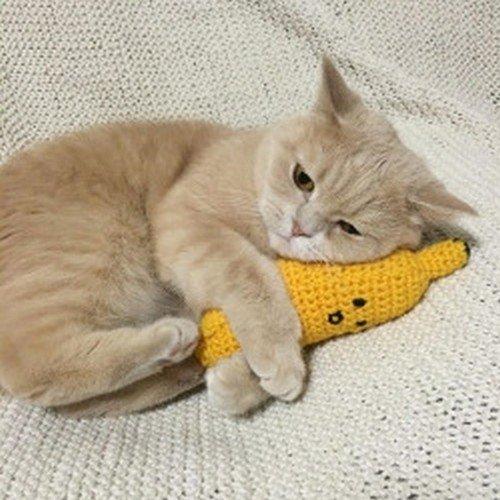 cat cuddling banana