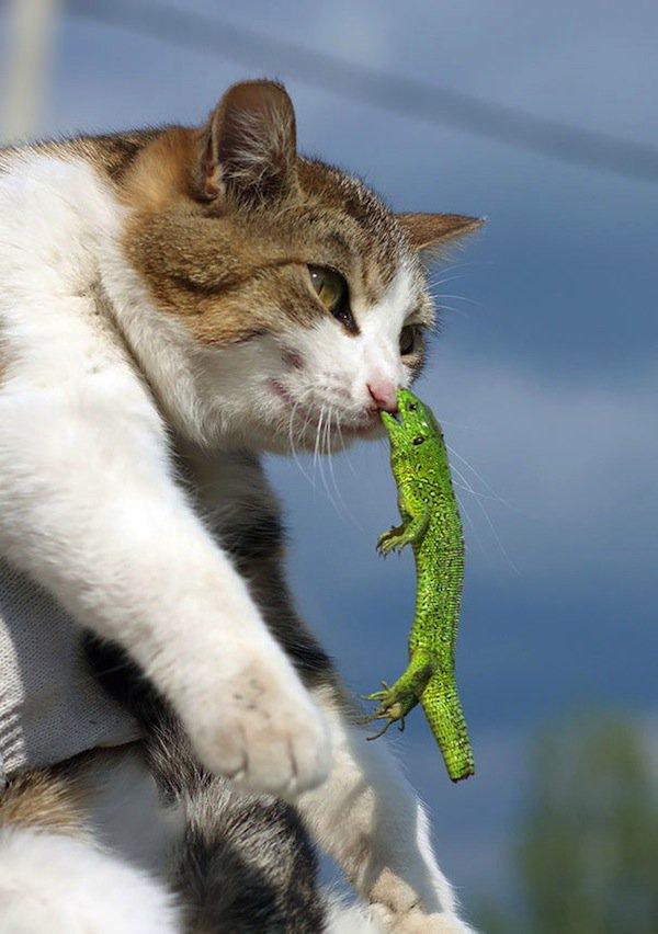 cat-lizard