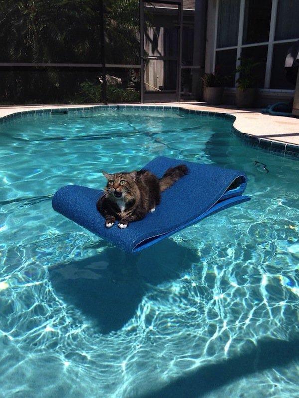cat-pool