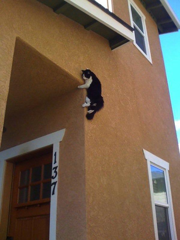 cat-wall