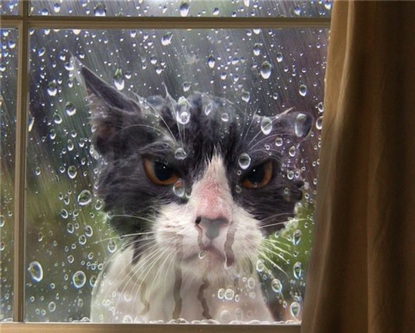 cat-wet