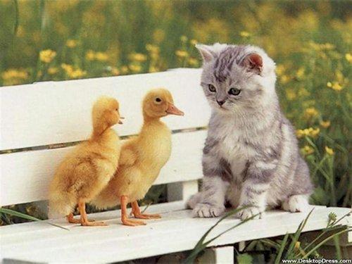 curious-animals-ducks