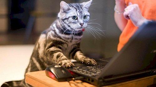 curious-animals-google