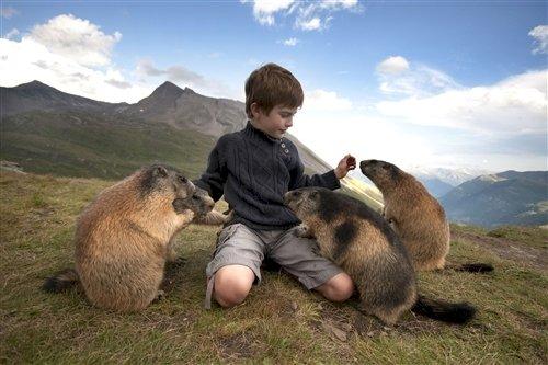 curious-animals-marmot
