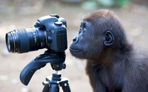 curious-animals-primate
