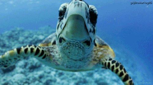 curious-animals-turtle