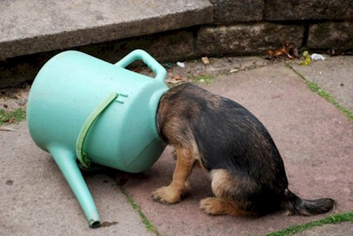 curious-animals-watering-can