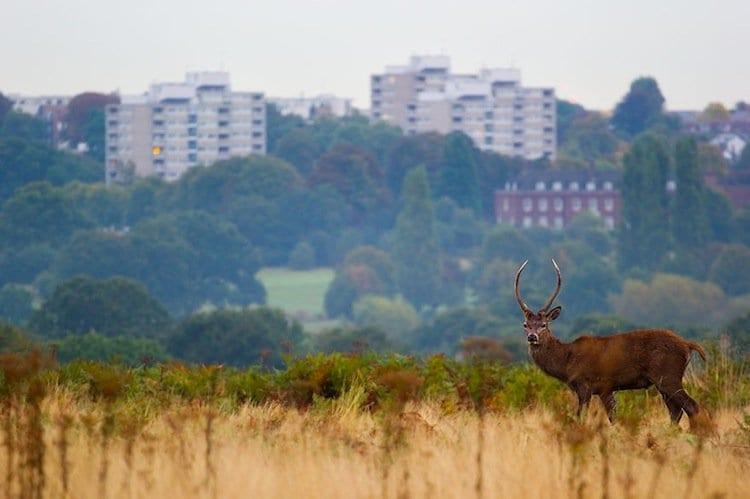 deer-buildings