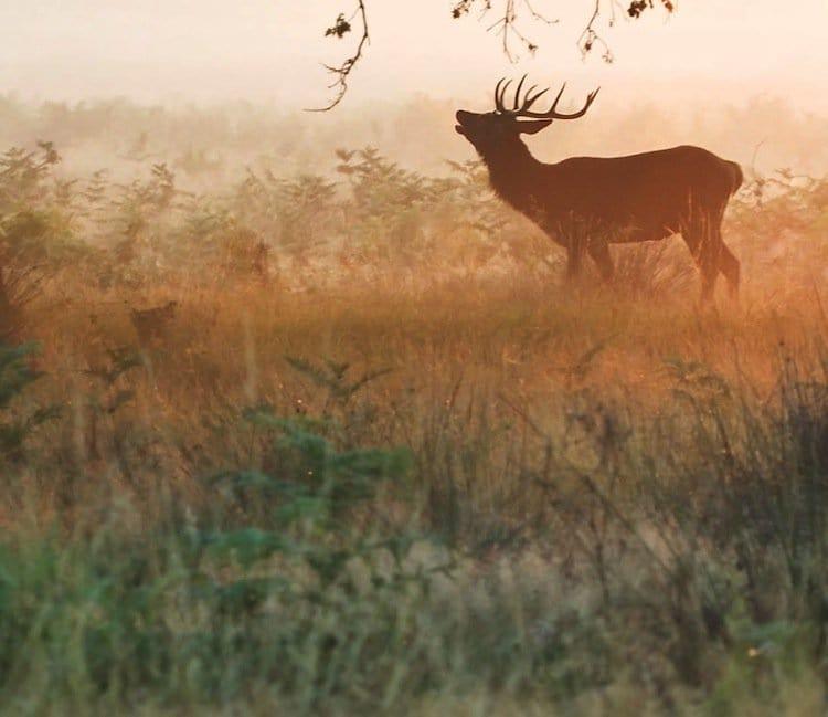 deer-deer