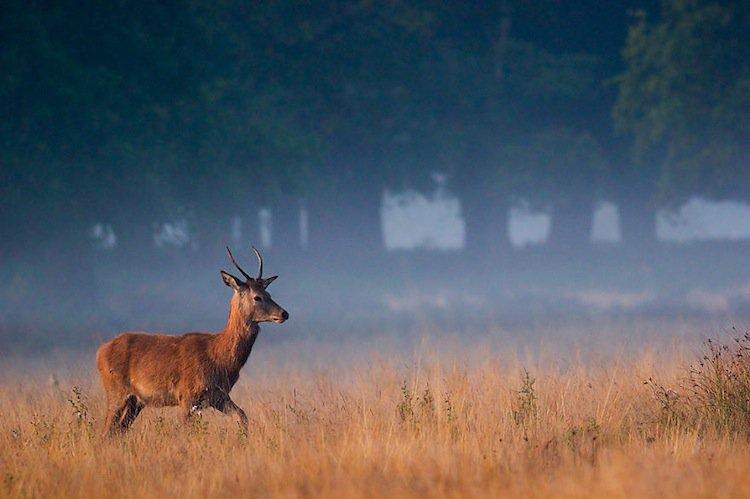 deer-feet