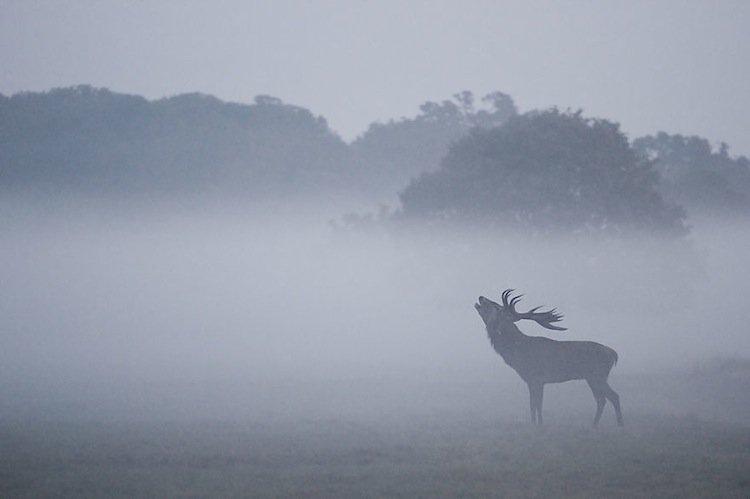 deer-first