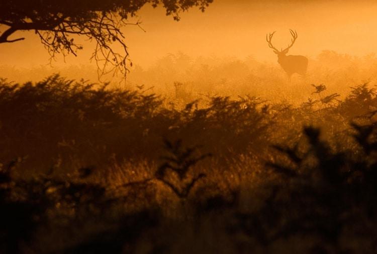 deer-mist