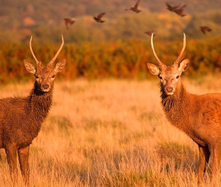 deer-s