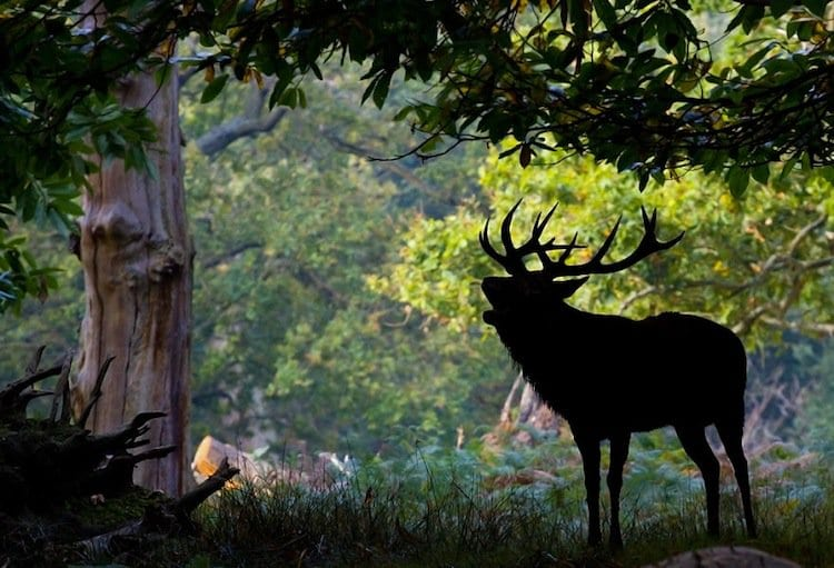 deer-shadow