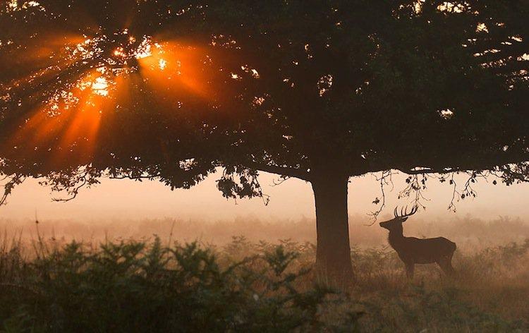 deer-tree