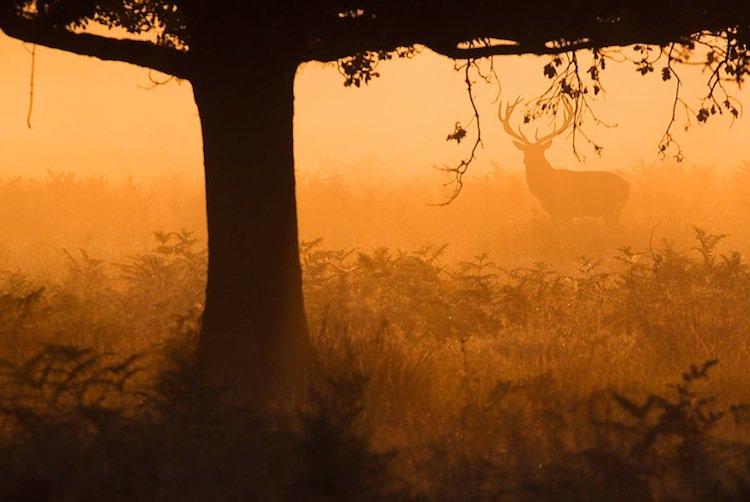 deer-trees