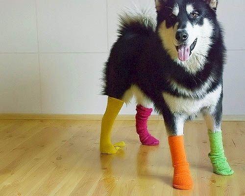 dogs-in-socks-colors