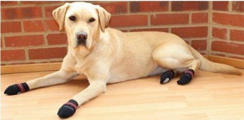 dogs-in-socks-lab