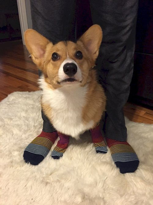 dogs-in-socks-matching