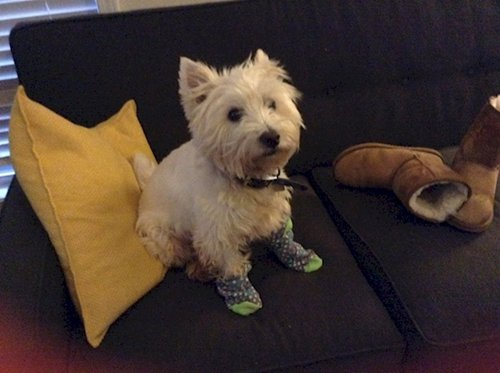 dogs-in-socks-sofa