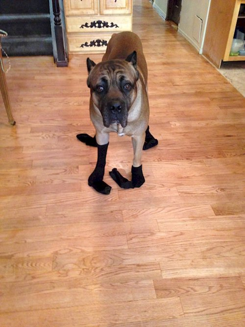 dogs-in-socks-what