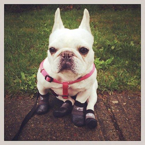 dogs-in-socks-yard