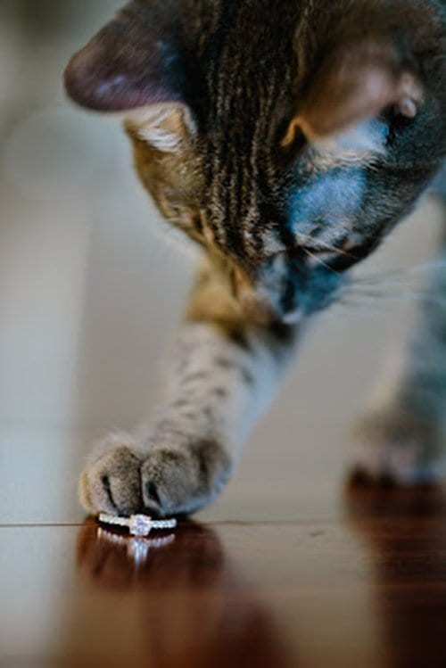 engagement-photos-kitty